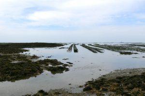huitre pleine mer normandie